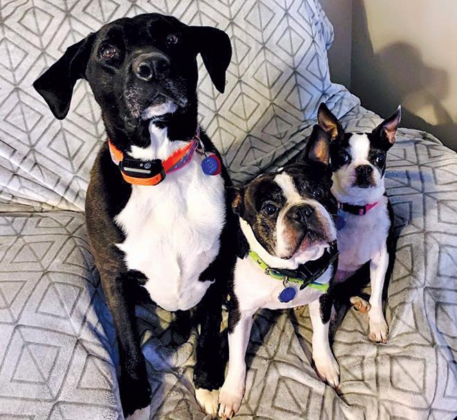 Wonderful family ready to adopt
